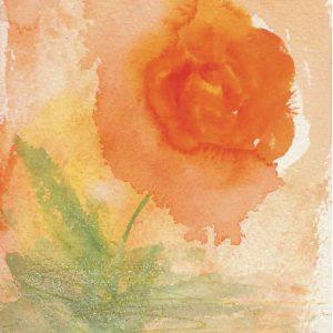 1079-rose-herzogin-fredericke