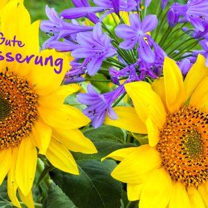 9197-sonnenblumen